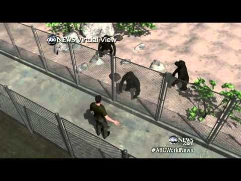 Chimp Attacks Texas Student: Andrew Oberle Fighting for ...