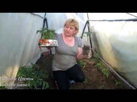 Штамбовые сорта томатов фото новые и лучшие Сайт о