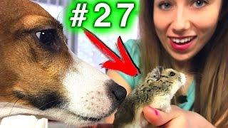 СМЕРТЕЛЬНЫЙ НОМЕР СОБАКА VS ХОМЯК КОНКУРС #27   Elli Di Pets