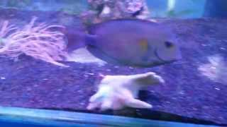Морские рыбки(Фото морских рыбок с описанием можно посмотреть на портале AQUARIUM-VL.RU Содержание рыб и совместимость с беспо..., 2015-06-08T07:38:20.000Z)