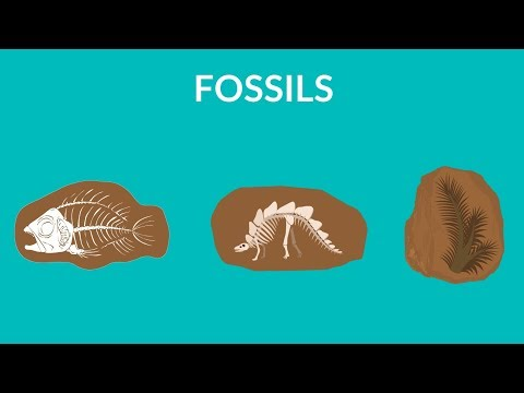 What are fossils and how are they formed | Learn about Fossils