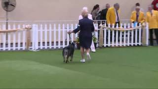 2016 Royal Adelaide Show - Dog Judging Saturday 3 September