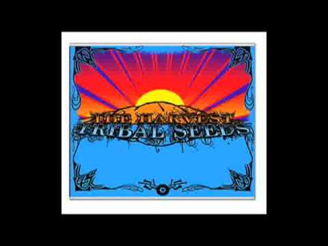 Tribal Seeds - Love Psalm.mpeg