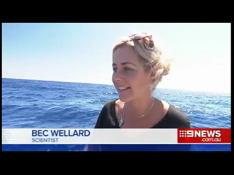 KILLER WHALE HOTSPOT in Bremer Canyon, Australia.  Channel 9 news.