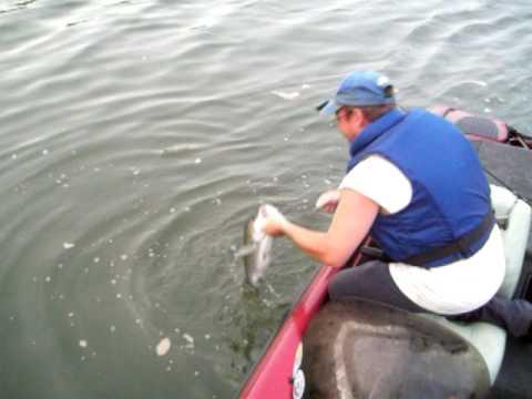 Dickdance striper fishing watts bar lake youtube for Watts bar fishing report