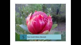Waratah, New South Wales