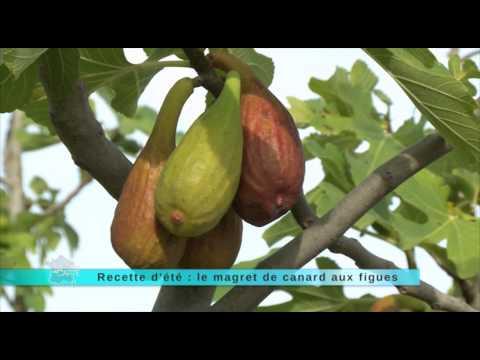 recette-:-le-magret-de-canard-aux-figues