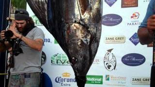 CatchStat | 2011 Bisbee's Black & Blue Tournament  Fish #10671