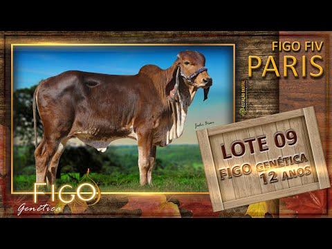 LOTE 09 - FIGO FIV PARIS - HCFG 1494