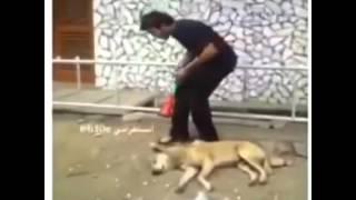 Бедный собак