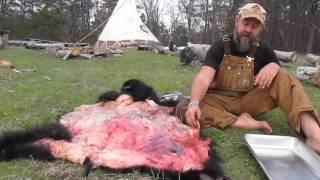 Brain Tanning a Bear Hide Part 1