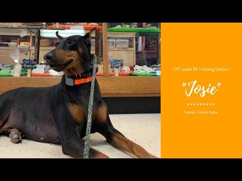 Doberman 'Josie' l Aggressive Transformation l Dog Training Michigan