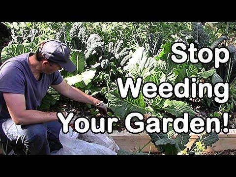 Stop Weeding Your Garden!