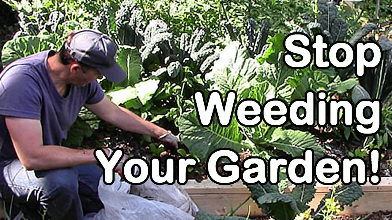 How Keep Weeds Out Garden