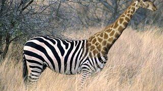 Как сделать гибрид животных с помощью маски и штампа?[Фотошоп]