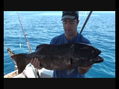 Spearfishing - Massive Bluespot Coral Trout!!