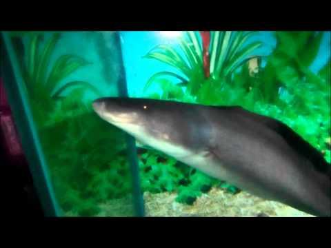 obyek-wisata-di-jawa-tengah-aquarium-purbayasa-purbalingga