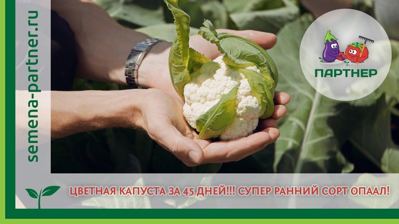 Как собирать семена капусты Сад и огород выпуск 057 - YouTube