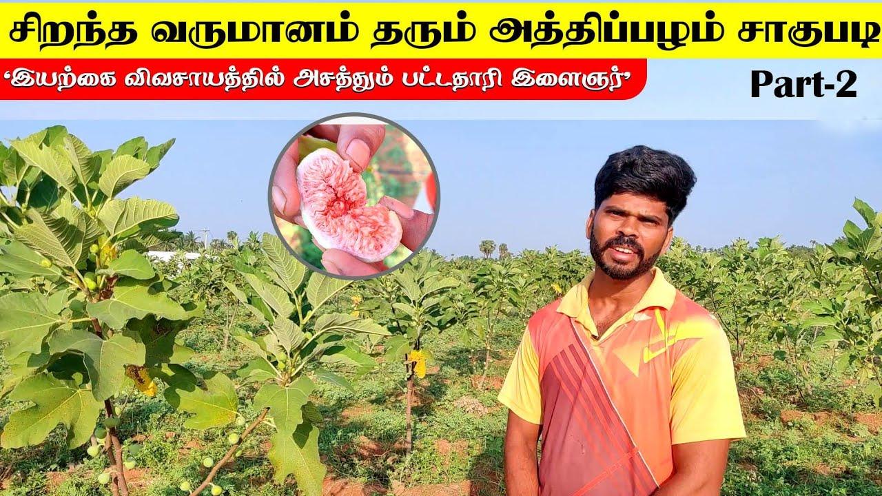 சிறந்த வருமானம் தரும் அத்திப்பழம் சாகுபடி | Organic Figg Fruit Farm in Tamilnadu | Part-2