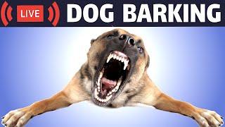 Dog Barking Sound | Dogs Barking Live Bark