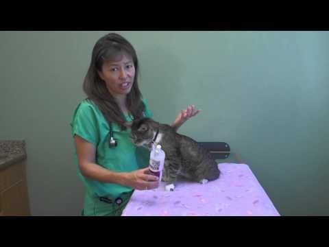Should I use Feliway in my cat? | Dr. Justine Lee