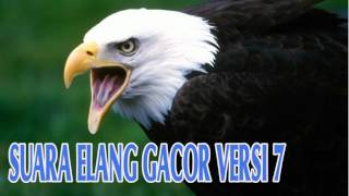 Download Suara Materan Burung Elang Gacor Versi 7 Full HD