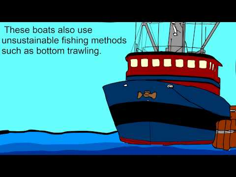 Ecology Research Project: Overfishing