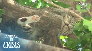 Starving Cat Stranded On A High Tree Begs For Food, But At Last.. | Animal in Crisis EP229