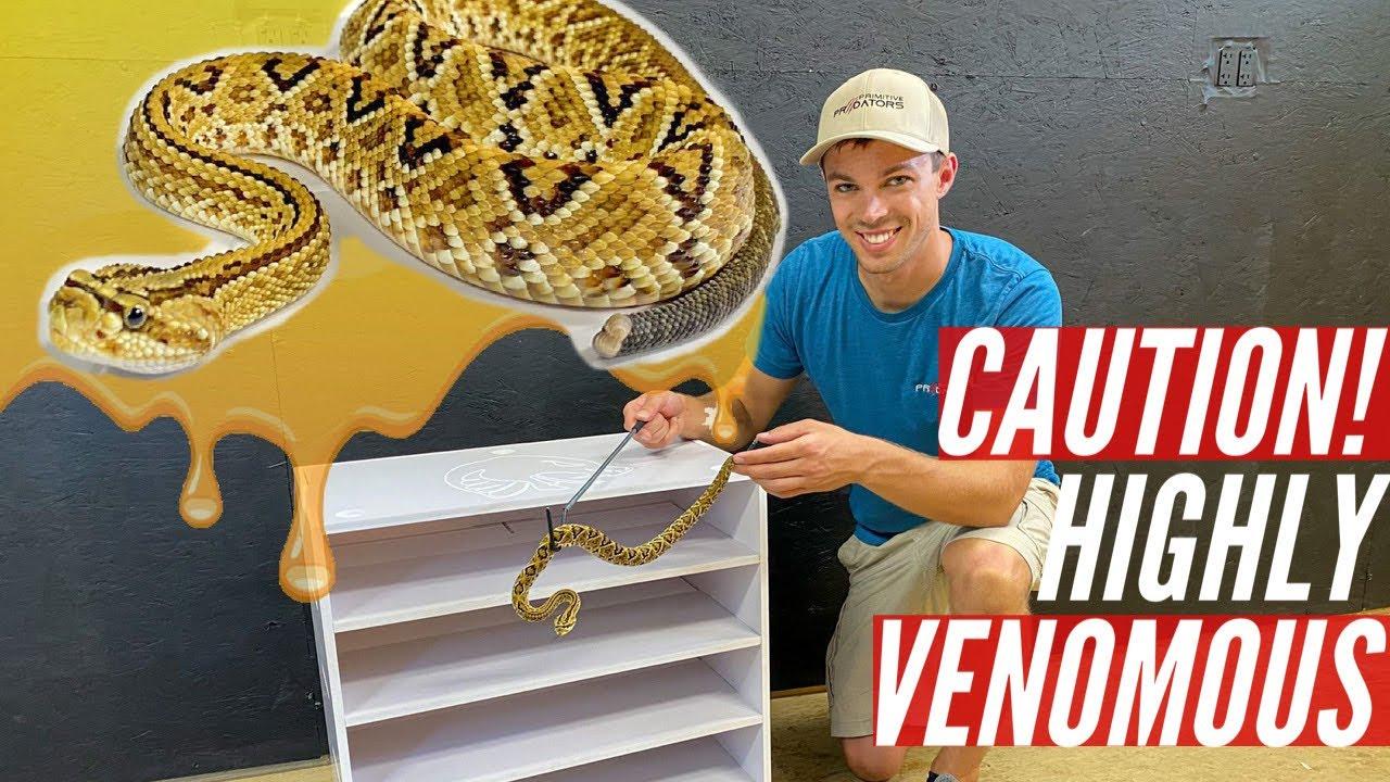 Snake Rack for HIGHLY VENOMOUS Rattlesnakes!