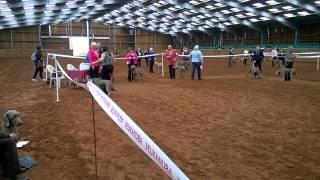 Weimaraner Association Champ Show - Rhea 3rd Place Pgb