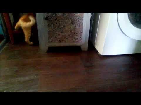 Кот Рыжик розвлекается.