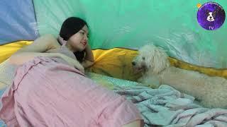 Отлично с моей любимой собакой , девочка и собака вместе дома, девушка обеспечивает собаку едой