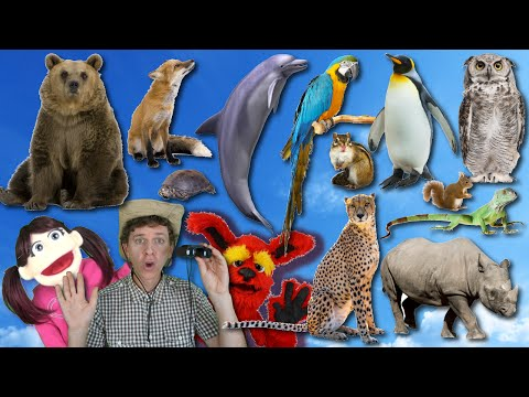 What Do You See? Song  Wild Animals Part 2   Learn English Kids