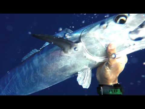 Bluewater Spearfishing - Hawaii