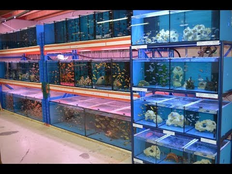My cichlid store from lake Malawi, European style....