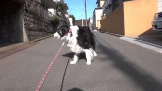 BorderCollie看板犬の鼻パク動画チャンネル https://www.yo...