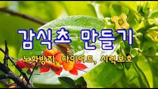 감식초 만들기 (노화방지, 다이어트, 시력보호)