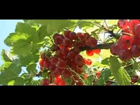 Июльские ягоды!