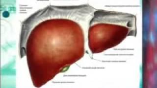 Лецитин   фундамент крепкого здоровья(, 2015-12-06T13:06:17.000Z)