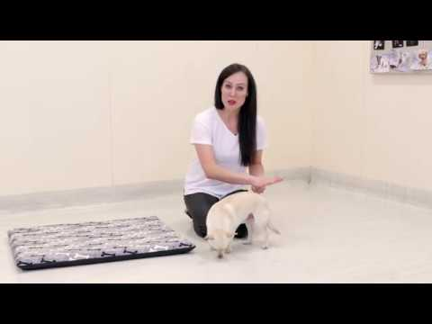 How to teach a puppy to lay down or drop