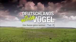 Deutschlands wilde Vögel - Teil 2 - Die Reise geht weiter - Kinotrailer