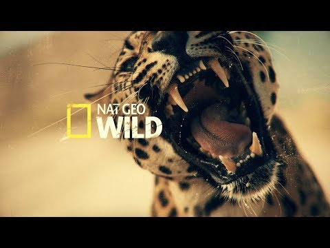National Geographic Music Video