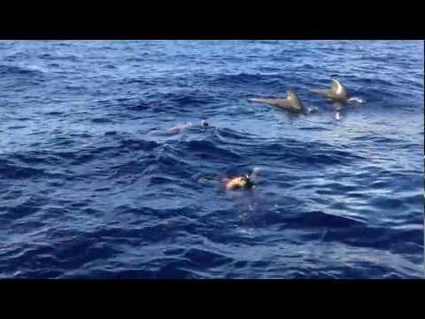 Nadando con ballenas y delfines solo de for Piscina la ballena tenerife