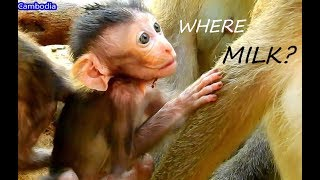 Cute Baby Malo ! Where Milk Mom Baby Hungry   Why Mom Not Know Baby Feel Hungry?