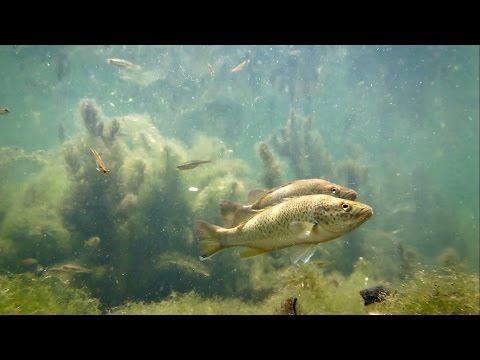 Life in the North Pine River SE Queensland Australia