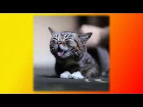 Видео Смешные приколы про кошек Создай себе хорошее настроение