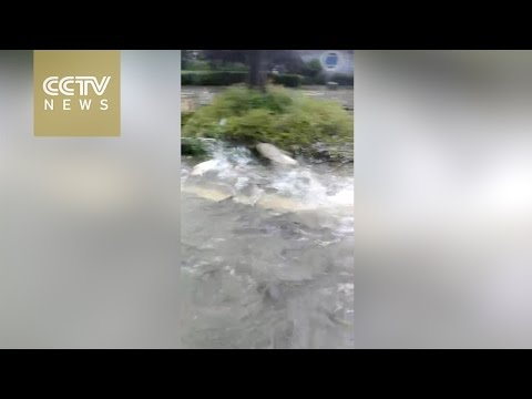 Fish seen on flooded streets of central China's Wuhan