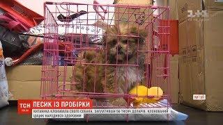 Китаянка клонувала свого собаку, заплативши 56 тисяч доларів