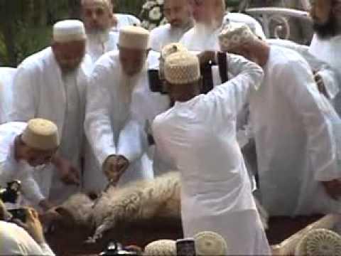 Huzurala (t.u.s.) doing zabihat at saifee mahal