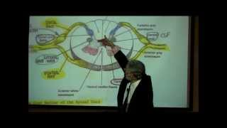 THE SPINAL CORD & SPINAL TRACTS; PART 1 by Professor Fink